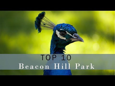 Top 10 Must See Things in Beacon Hill Park, Victoria BC - Vlog 117