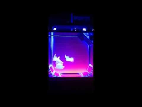 DIY JellyFish Aquarium - Flow Adjustment