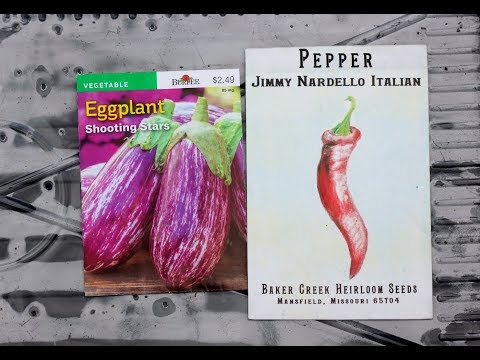 How To Grow Peppers And Eggplants: Sowing Seeds