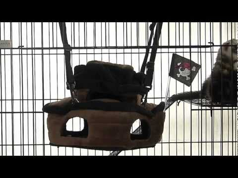 Pirate Ship for Ferrets by Marshall Pet Products