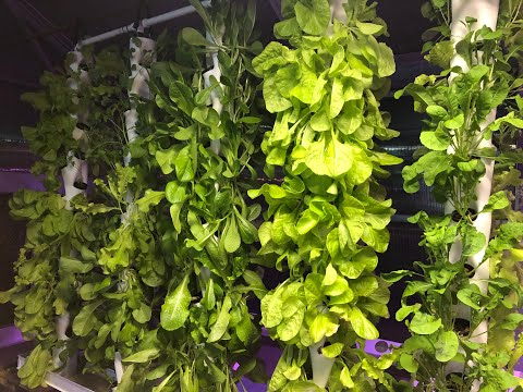 This Vertical Hydroponics System is Built by University Students from Start to Finish