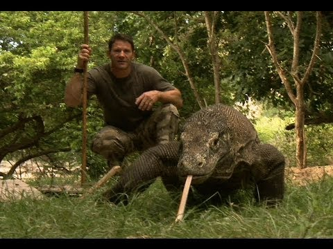 Largest Lizard on Earth   The Komodo Dragon   Deadly 60   Indonesia   Series 3   BBC