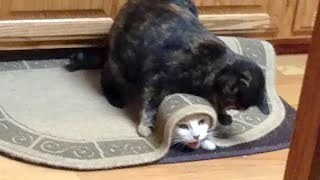 Funny CATS 😺 DOGS 🐶 BIRDS 🐦- JUST LAUGH and FORGET STRESS
