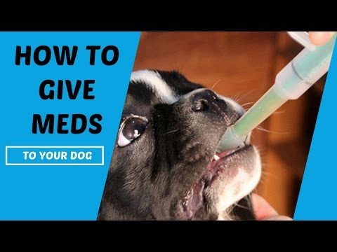 How To Give Medication To Your Dog