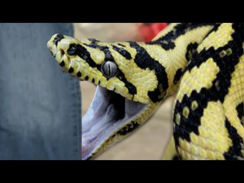 SNAKE ATE MY PANTS! | BRIAN BARCZYK
