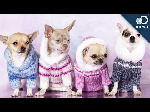 Does Your Dog Really Need A Sweater?