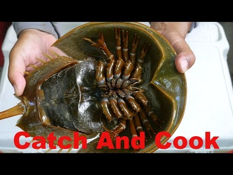 Catch And Cook: 450 Million Year Old Living Fossil - Horseshoe Crab