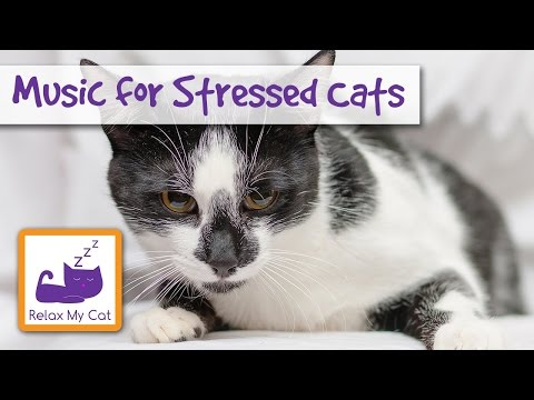 Calm Down Your Stressed Cat with Relaxation Music 🐱 #STRESS04