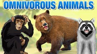 Omnivorous Animals Names   Simba Tv   Omnivores Animals Names List   Educational Video