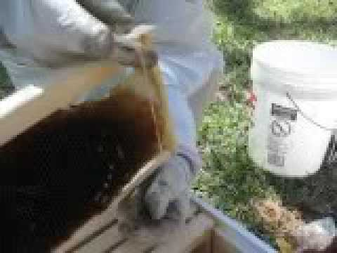 Live Bee Rescue 4 of 4