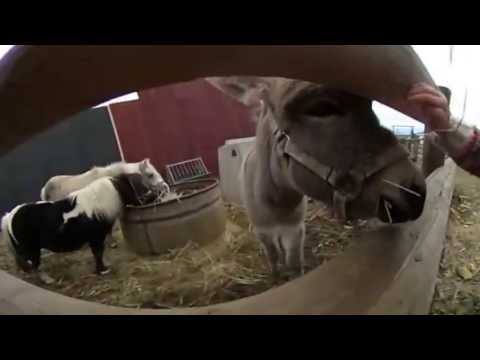 Say Hello to a Donkey in VR!