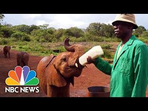 Woman Helping Lead Charge Against Elephant Tusk Poaching In Africa   Megyn Kelly   NBC News
