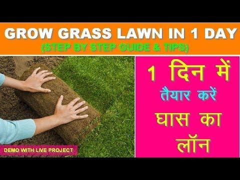 Grow Grass Lawn in 1 day II Step by Step Guide & Tips II 1 दिन में तैयार करें घास वाली लॉन II Live