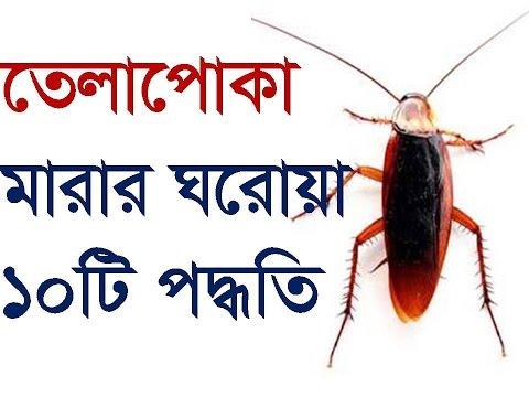তেলাপোকা ধ্বংসের প্রাকৃতিক উপায় | Cockroaches Home Remedies