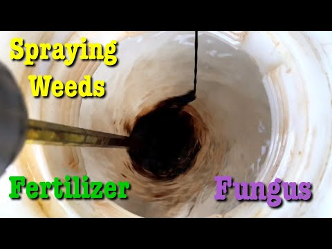 Weed Spray Results Before and After - More Fertilizer