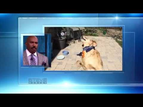 This dog is DUMB || STEVE HARVEY