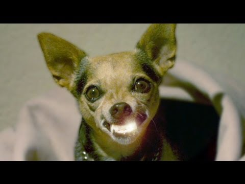 DIY Teeth Cleaning for Dogs and Cats (NO Anesthesia)