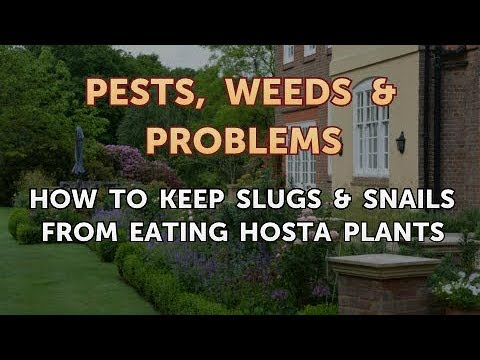How to Keep Slugs & Snails From Eating Hosta Plants