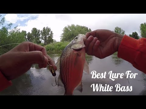 Utah lake: how to catch all the white bass in the lake!!! part 1