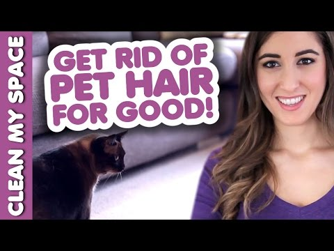 Clean Pet Hair for GOOD! How to Clean Up After Your Pets! (Clean My Space)