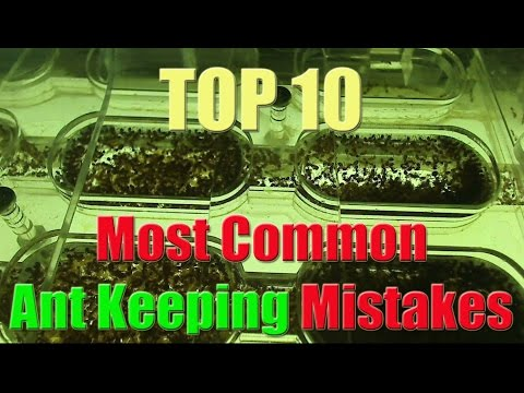 Top 10 Biggest Mistakes in Ant Keeping
