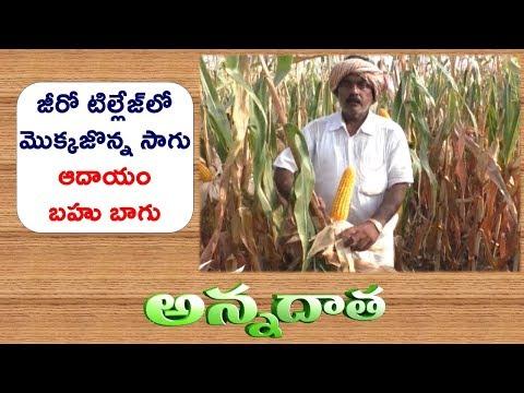 Zero Tillage Maize | by Srikakulam Farmers || ETV Annadata