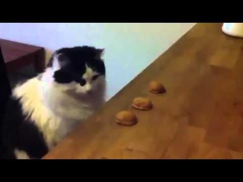 Cat Magic Trick