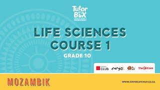 10. Klasse Life Science Kurs 1: Chemie des Lebens