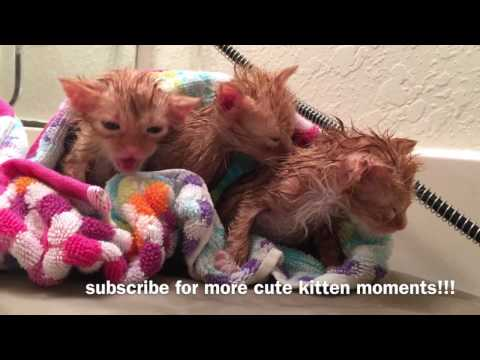 New December Foster Kittens! Flea Bath Time! Five Weeks Old