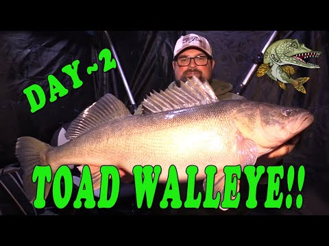 Ice Fishing for TOAD WALLEYE!! 12LB!!