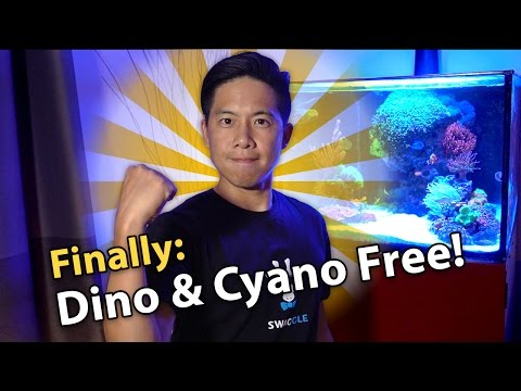 Tank Update 9/21/2016: Dino Algae & Cyanobacteria Free! Here's how we beat it!!