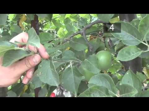 How and When to Prune a Fruit Tree