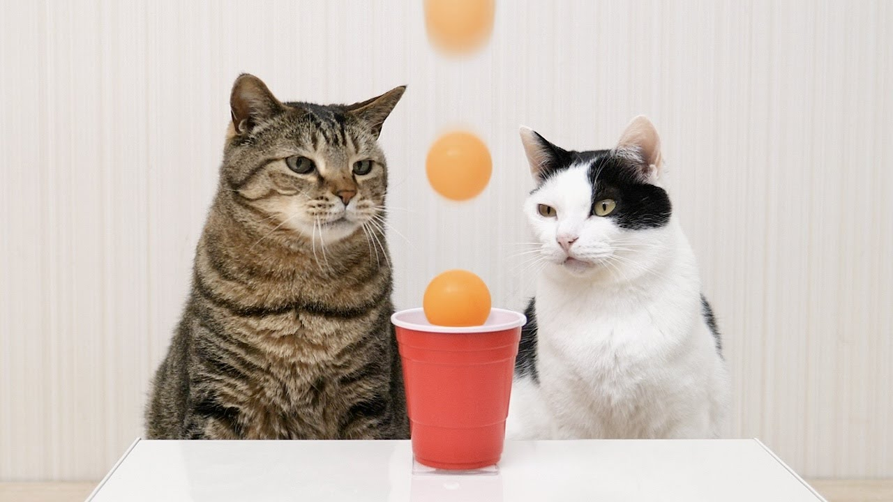 Cats and Ping Pong Trick Shots
