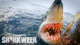 Up Close With A Grander Mako Shark Shark Week Mp3