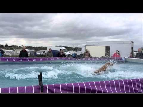 K9 Aqua Sports UK
