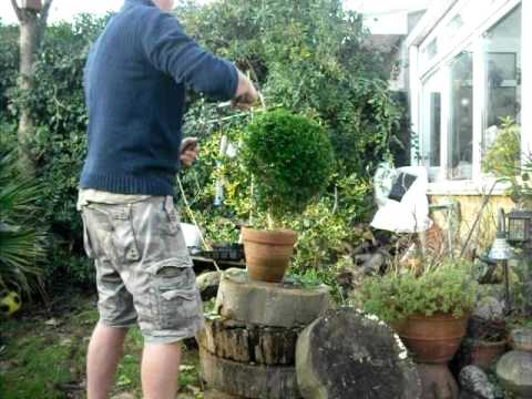 How to trim a box shrub into a ball in under 2 minutes