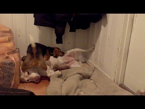 What happens when you leave two dogs alone