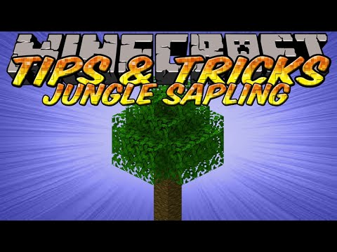 Minecraft Tips and Tricks - Jungle Saplings Duplication - Conservation - Bulky Normal Trees