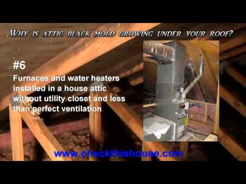 Black Mold in Attic - Why is it Attic Mold Growing Under Your Roof?