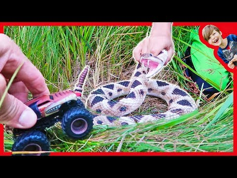 Monster Truck Attacked By Rattle Snake! - Toy Truck Favorites