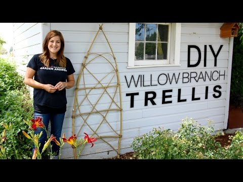 Make Your Own Willow Branch Trellis--it's DIY Time!