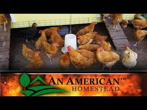 Your Chickens ARE GONNA DIE!!