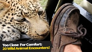 Top 15 Wild Animals That Got Dangerously Close!