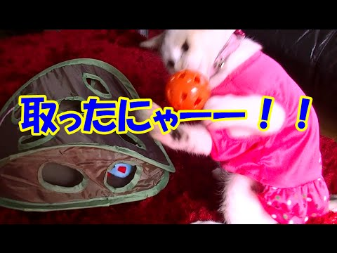 猫おもちゃ【マウスハント】で猫キック炸裂!Neko-Cat kicking with a cat toy [Mouse Hunt]