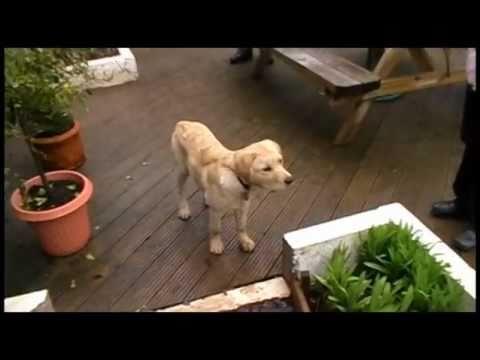 Guide dog puppy Ufton