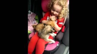 Delight through puppies
