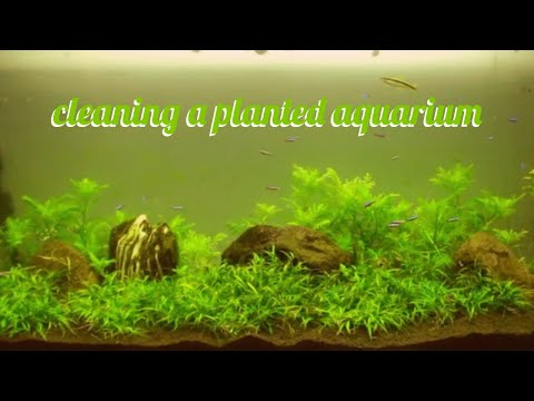 how to clean a fish tank (my dirty planted aquarium) 1080p