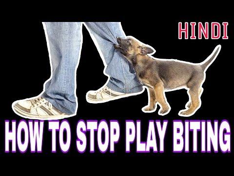 7 Techniques To STOP Puppy Play Biting 2018 New {पप्पी के काटने की आदत कैसे दूर करें}