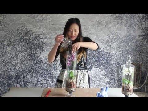 How to make an Orchid Terrarium
