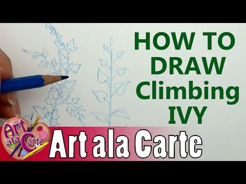How to draw Climbing IVY